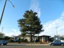 Förorts- träd Arkivfoto