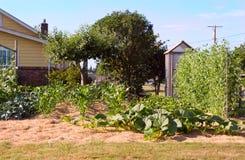 Förorts- trädgård Royaltyfri Fotografi