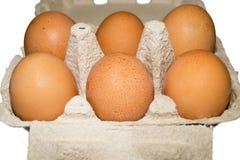 Förpacka för ägg isolerat Arkivfoto