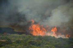 Förrymd kust- buskebrand Arkivfoto
