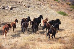 förrymda hästar Royaltyfria Foton