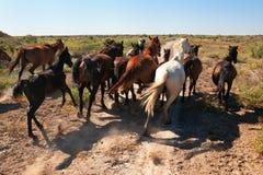 förrymda hästar Arkivfoton