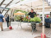 Försäljaren ordnar blommor på den utomhus- marknaden på Lower Manhattan Arkivbild