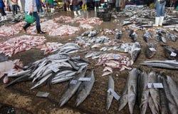 Försäljningsfiskbarracudor Arkivbilder