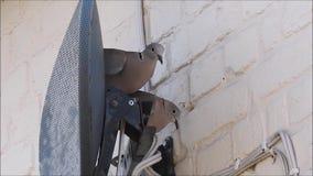 Försåg med krage duvor som ställer in - upp hem med redet bak satellit- maträtt stock video