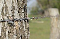 förse med en hulling stakettråd Fotografering för Bildbyråer