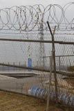 Försedd med en hulling - trådstaketet avskiljer söder från Nordkorea - bönönska som binds för att fäkta - Asien NOVEMBER 2013 Royaltyfria Foton