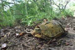 försedd med gångjärn turtoise arkivfoton