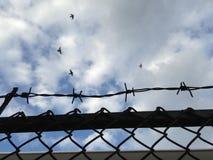 Försett med en hulling - staket för trådingrepp mot blå himmel (den selektiva fokusen av trådstaketet) Royaltyfri Foto