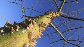 Försett med en hulling träd Royaltyfri Fotografi