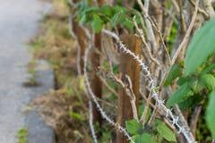 Försett med en hulling - tråd och bevuxna växter Royaltyfri Foto