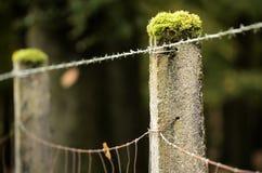 Försett med en hulling - tråd och gräns Fotografering för Bildbyråer