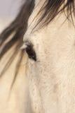 försiktig häst Royaltyfri Bild