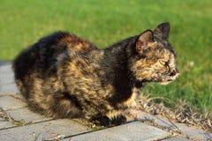 Försiktig katt Arkivbild