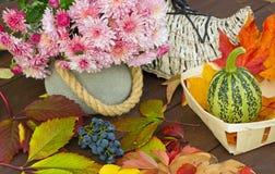 Försiktig-rosa färger blommor av krysantemum och pumpa- och blåttdruvor på sidor Royaltyfri Bild