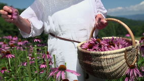 Försiktigt revablommor