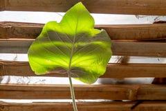Försilvra bladet för morgonhärlighet ligger på bambusängen royaltyfri bild