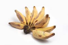 Försilvra Bluggoe, en lokal banan av Thailand arkivfoto