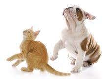 Förskräckt hund och katt Arkivbilder