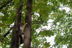 Förskräckt katt på trädet Arkivfoton