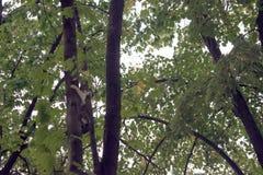 Förskräckt katt på trädet Fotografering för Bildbyråer