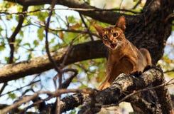 Förskräckt katt utomhus på träd arkivfoto