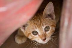 Förskräckt kattunge som döljer från kamera arkivfoto