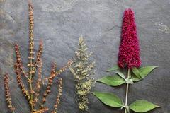 Försommar blommar med Buddleis och lösa gräs royaltyfria bilder