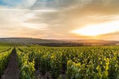 Försommar i Champagne, Frankrike Arkivbild