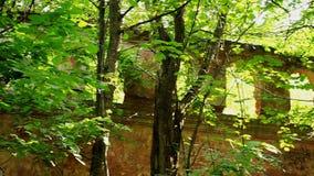 Förstörd byggnad i skogen stock video