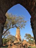 Förstörd forntida tempel av det Ayutthaya kungariket Royaltyfri Fotografi