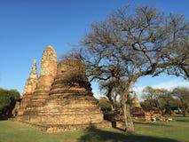 Förstörd forntida tempel av det Ayutthaya kungariket Arkivfoton