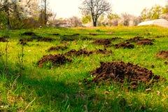 Förstörd gräsgräsmatta vid skada som göras av vågbrytaremullvadshögar royaltyfria foton