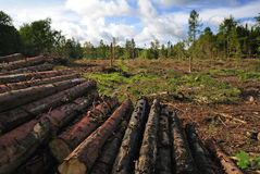 förstörd skog Royaltyfri Foto