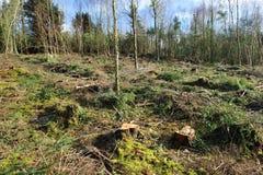 förstörd skog Royaltyfria Foton