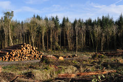förstörd skog Arkivbilder