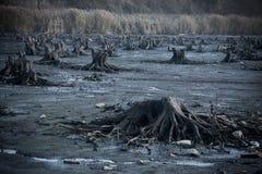 Förstörd skog och område fotografering för bildbyråer