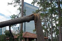 förstörd tree Royaltyfri Foto