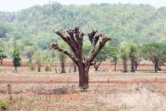 Förstörelsen av skogar för skiftande odling arkivbilder