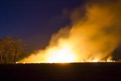 Förstörs det brinna skogsekosystemet för löpelden arkivbild