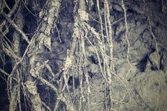 Förstört abstrakt begrepp och begränsar rhizomar av träd Arkivbild