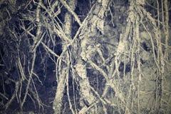 Förstört abstrakt begrepp och begränsar rhizomar av träd Royaltyfri Fotografi
