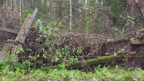 Förstört staket i skog lager videofilmer