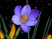 först blommafjäder Royaltyfria Bilder