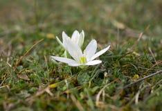 först blommafjäder royaltyfri fotografi