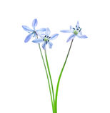först blommafjäder royaltyfri foto