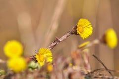 först blommafjäder Fotografering för Bildbyråer