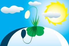 först sun för blommasnowdropfjäder under Arkivbilder