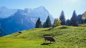 Första berg Schweiz Arkivfoto