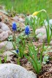 första blommafjäder Royaltyfria Bilder